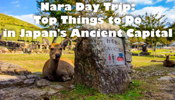 Nara Day Trip: Top Things To Do in Japan's Ancient Capital