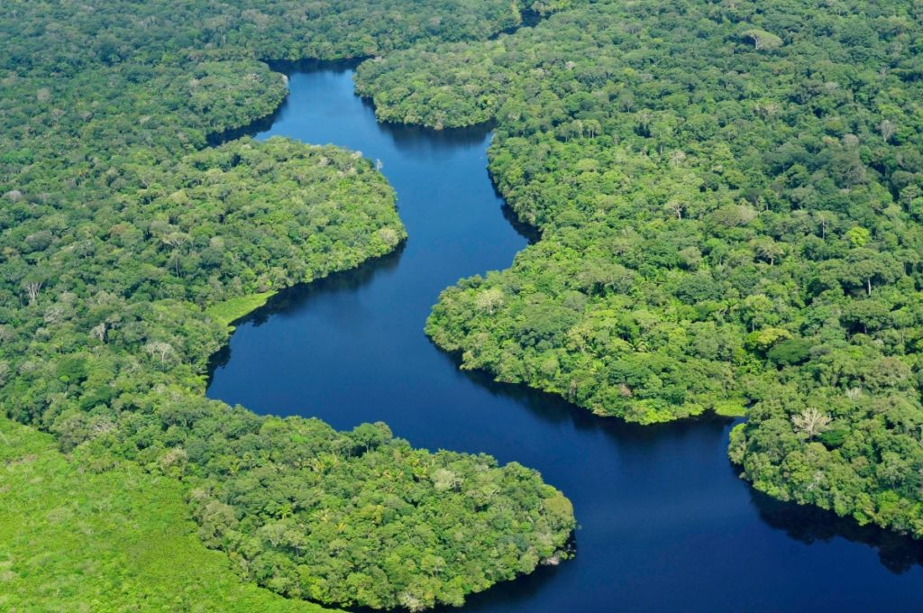 The Amazon Rainforest (source: https://www.flickr.com/photos/cifor/)