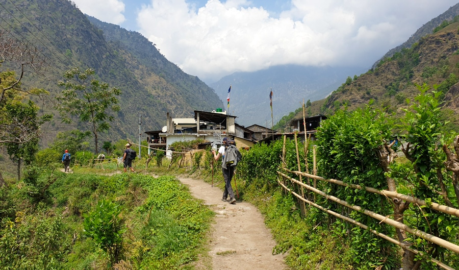 Hikers walking past green fields near village of Ghermu as part of the Annapurna Circuit itinerary