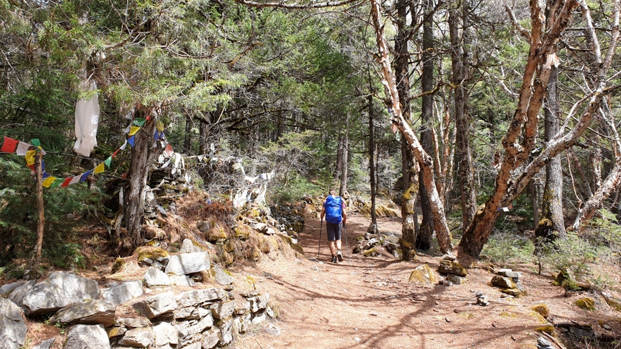 A hiker walking through a pine forest past a stone wall with colourful prayer flags