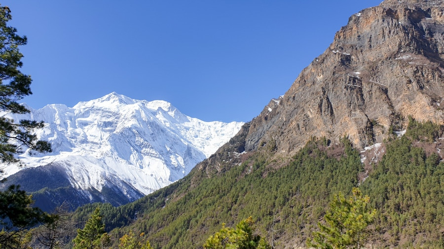 A forested mountain slope with a face of Annapurna II in the background