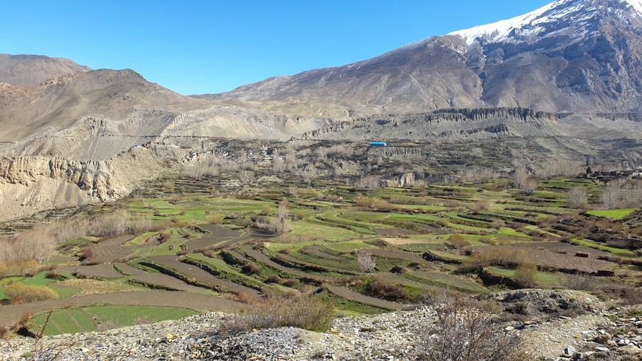 Terraced fields among arid landscape near Muktinath