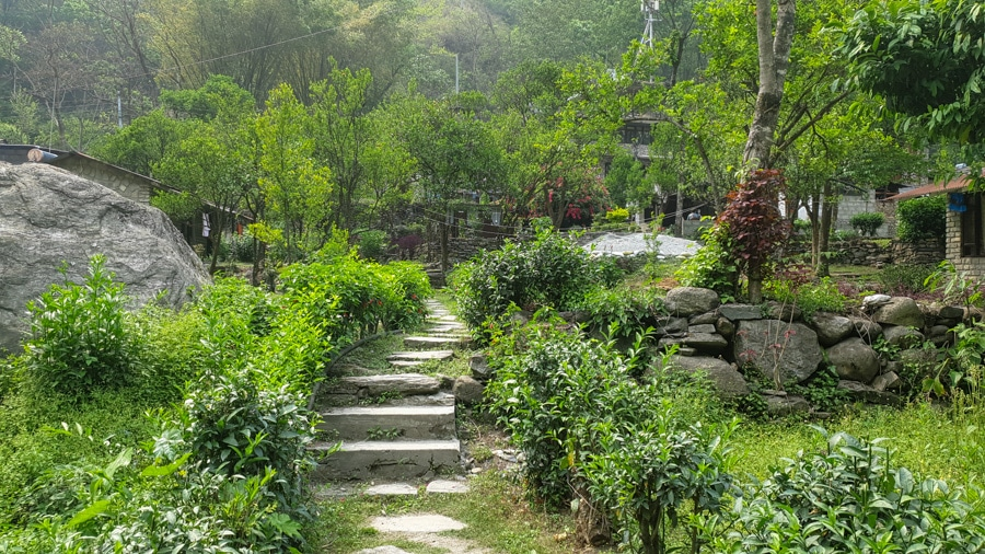 Steps leading to a lush green garden