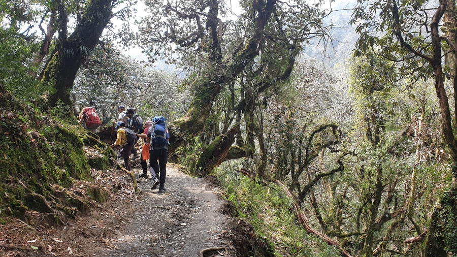 Hikers following a path through a forest from Ghorepani to Ghandruk