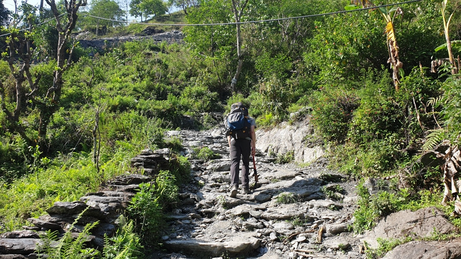 A hiker climbing steps in a forested area